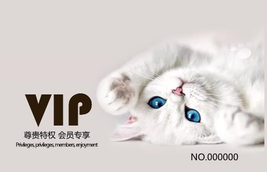 宠物猫VIP会员卡模板下载