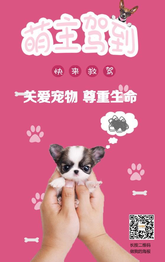 关爱宠物知识宣传海报模板下载